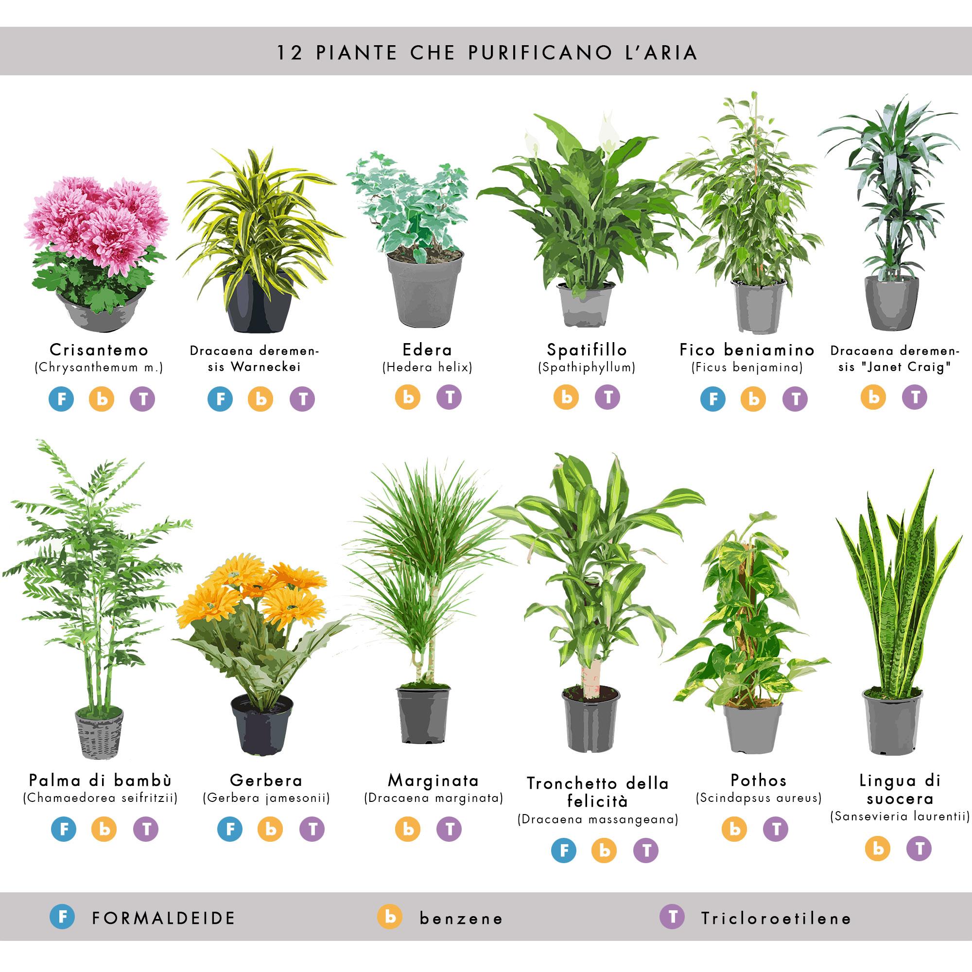 piante contro l'inquinamento indoor