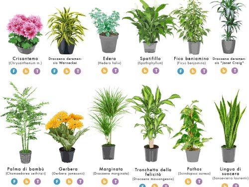 Inquinamento indoor: le piante domestiche che purificano l'aria