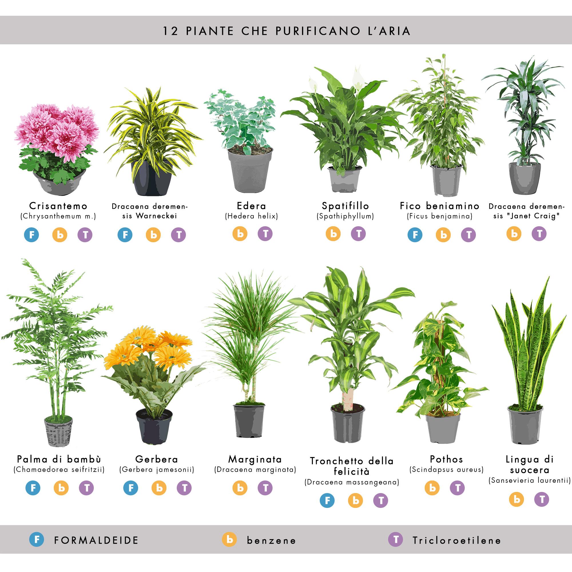 Inquinamento indoor: le piante domestiche che purificano l ...