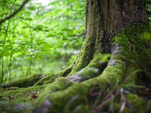 La silenziosa, inesorabile, estinzione delle piante.