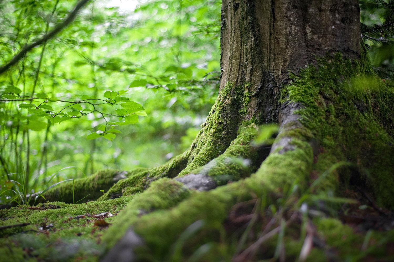 estinzione piante