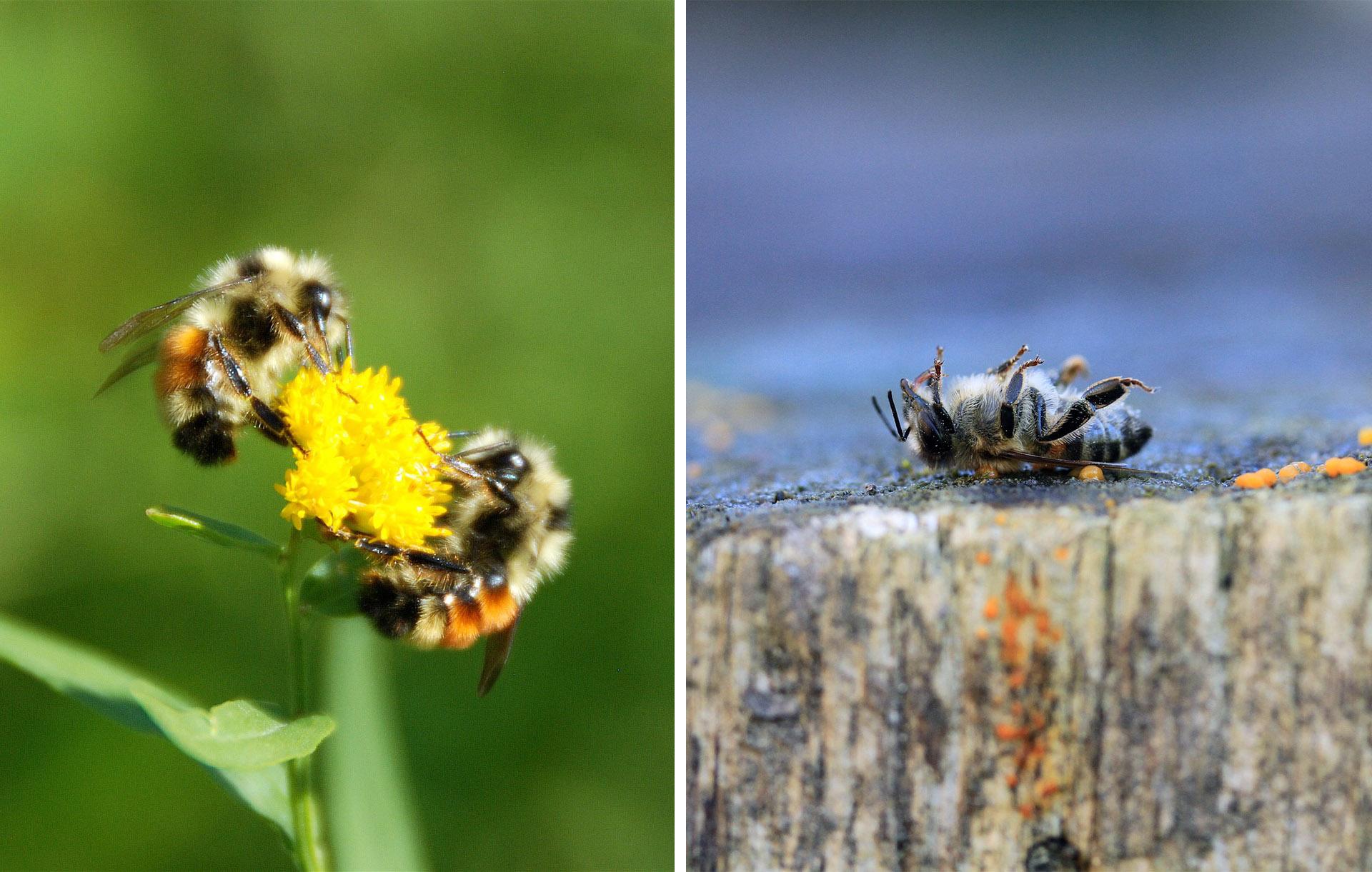 api agricoltura fitosanitari