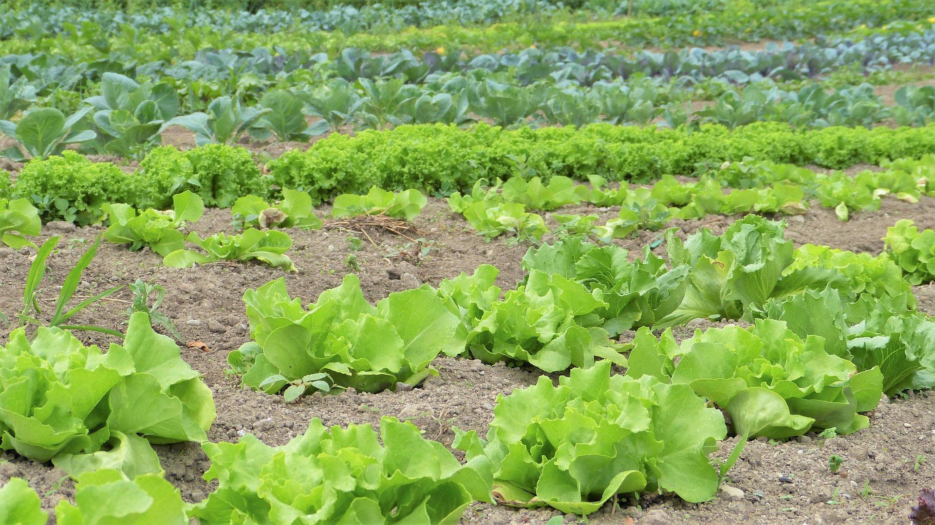ortaggi diserbanti agricoltura