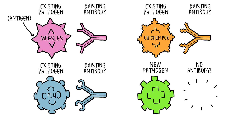 immune vaccine